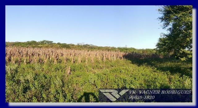 VR-Belíssima Fazenda 130ha com Estrutura, Localização Privilegiada, Valor Super Atrativo - Foto 6