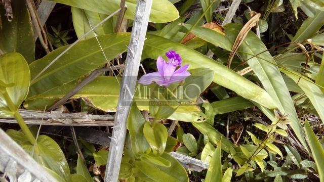 Terreno à venda em Taipu de fora, Maraú cod:57863649 - Foto 7