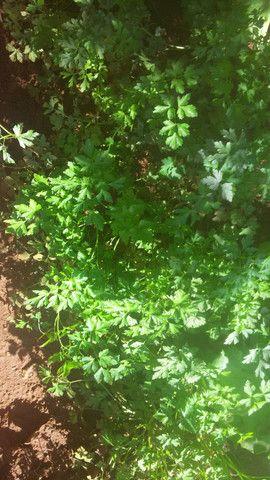 verduras Orgânicas alface etc.. - Foto 5