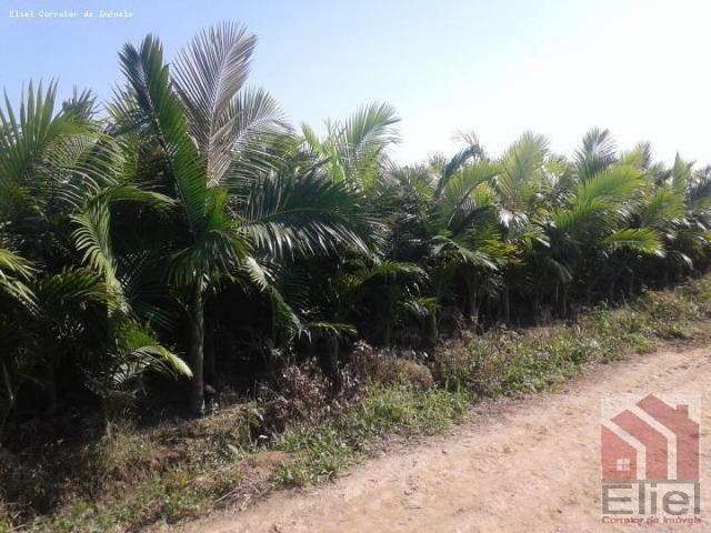 Fazenda Plana em Itapoá, Criação de Gado ou Plantio, Aceita Parte em Permuta - Foto 5