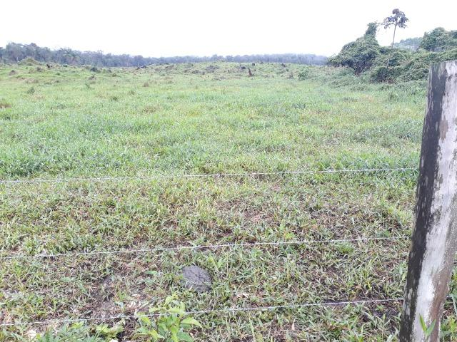 Fazenda Plana em Itapoá, Criação de Gado ou Plantio, Aceita Parte em Permuta - Foto 18
