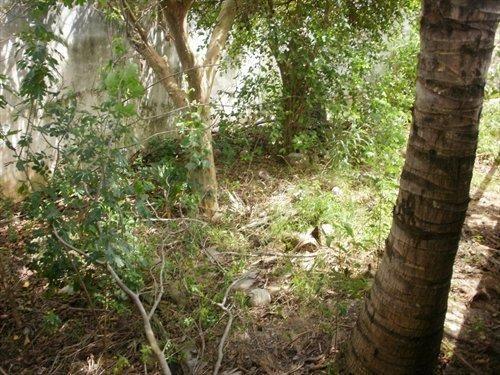 Casa com 2 dormitórios à venda, 136 m² por R$ 350.000,00 - Campo Redondo - São Pedro da Al - Foto 4