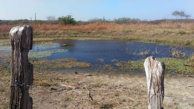 Fazenda em Pilão Arcado - BA - Foto 7