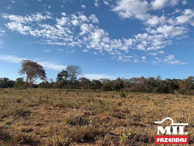 4 km de margens do Rio Araguaia. Fazenda 96 alqueires 464.64 Hectares - Aragarças-GO - Foto 17