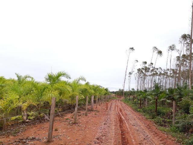 Fazenda Plana em Itapoá, Criação de Gado ou Plantio, Aceita Parte em Permuta - Foto 14
