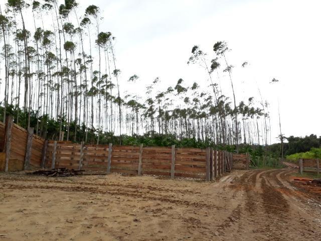 Fazenda Plana em Itapoá, Criação de Gado ou Plantio, Aceita Parte em Permuta - Foto 12