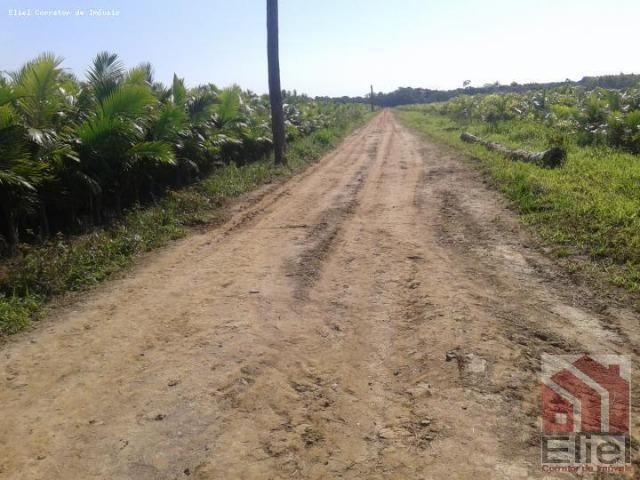 Fazenda Plana em Itapoá, Criação de Gado ou Plantio, Aceita Parte em Permuta - Foto 4