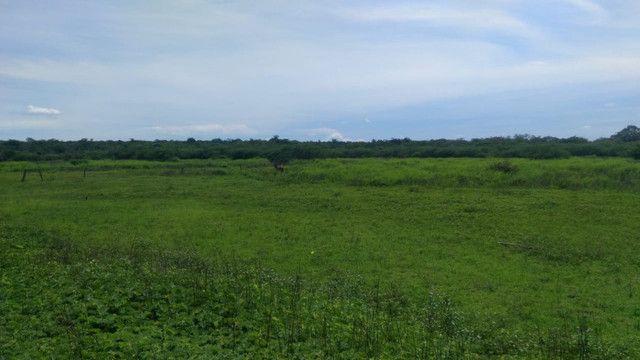 Fazenda em Pilão Arcado - BA - Foto 12