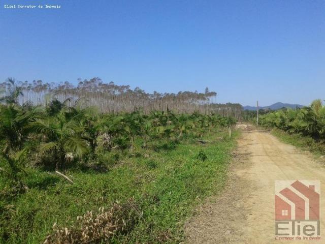 Fazenda Plana em Itapoá, Criação de Gado ou Plantio, Aceita Parte em Permuta - Foto 6