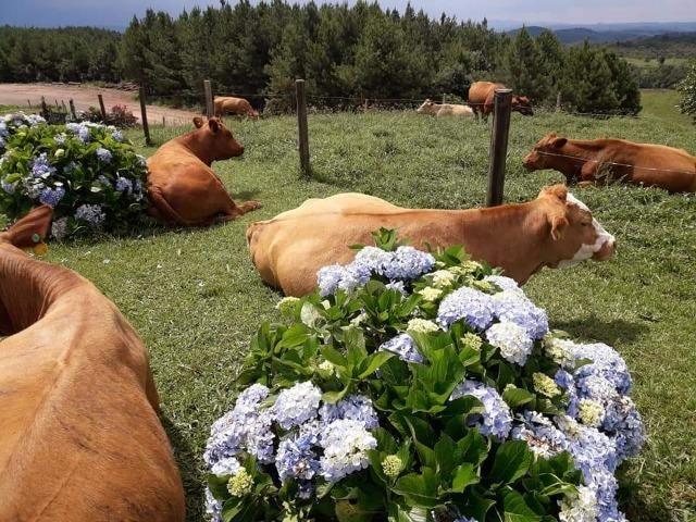 Fazenda Linda, Ideal Até para se Montar um Hotel Fazenda - Foto 17