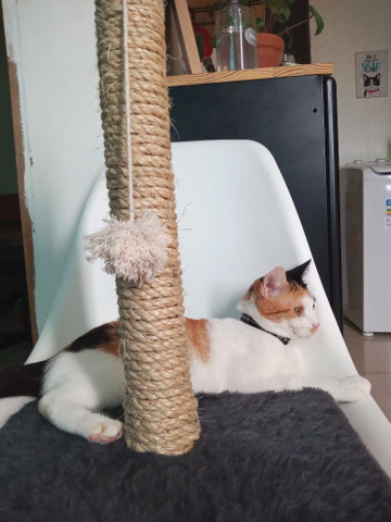 Arranhador artesanal para gatos