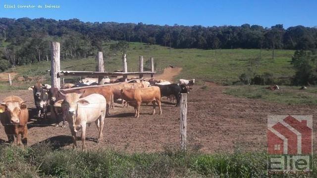 Fazenda para Plantio e Pastagem em Santa Terezinha - Foto 17