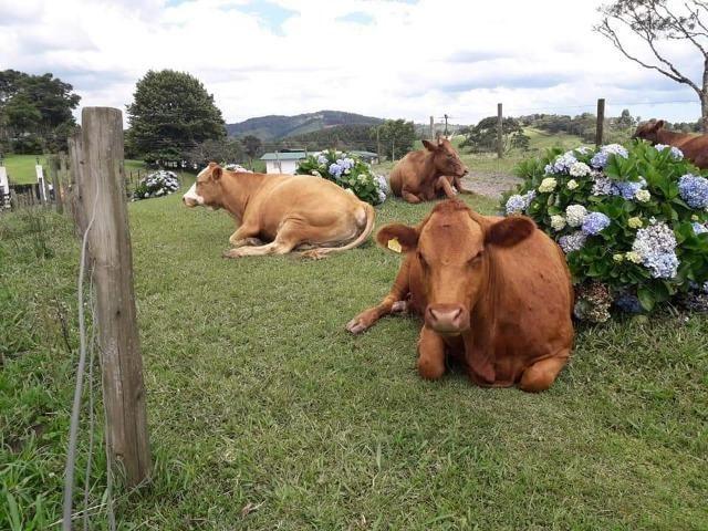 Fazenda Linda, Ideal Até para se Montar um Hotel Fazenda - Foto 14
