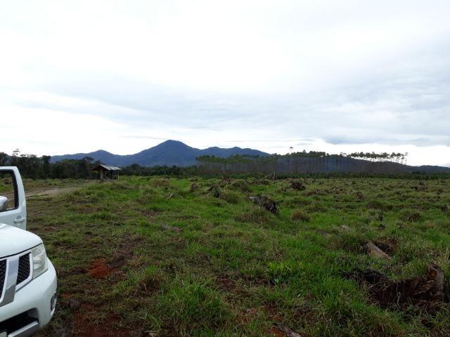 Fazenda Plana em Itapoá, Criação de Gado ou Plantio, Aceita Parte em Permuta - Foto 10
