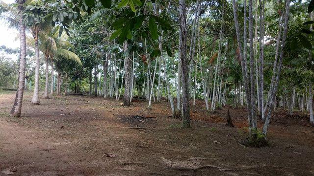 Vendo terreno ou troco por casa em Macapá  - Foto 6