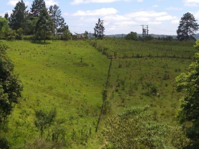 Vendo sítio em Caucaia do alto cotia - Foto 2