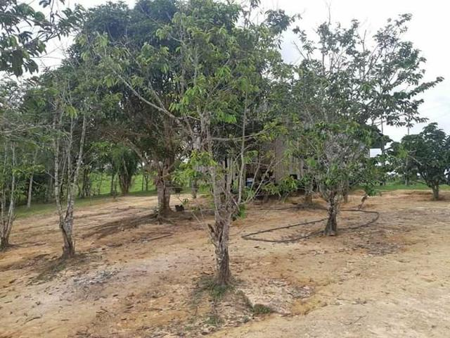 Vendo um pólo,localizado no 102 da estrada de Sena Madureira, 4 km de ramal - Foto 5