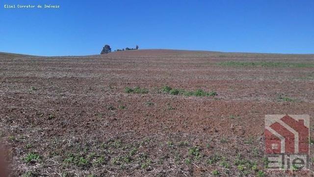 Fazenda para Plantio e Pastagem em Santa Terezinha - Foto 7