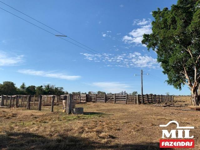 4 km de margens do Rio Araguaia. Fazenda 96 alqueires 464.64 Hectares - Aragarças-GO - Foto 9