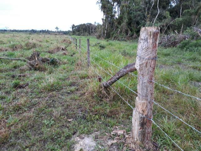 Fazenda Plana em Itapoá, Criação de Gado ou Plantio, Aceita Parte em Permuta - Foto 15