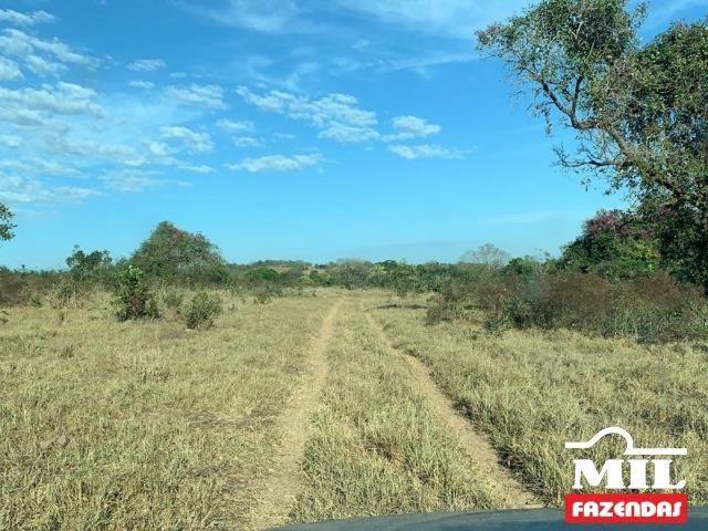 4 km de margens do Rio Araguaia. Fazenda 96 alqueires 464.64 Hectares - Aragarças-GO - Foto 15