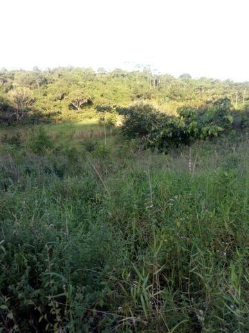 Sitio,granja de 11 hectare - Foto 5