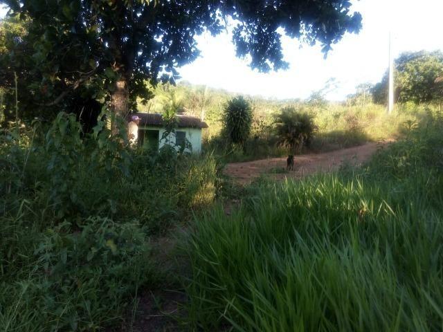 Sitio,granja de 11 hectare - Foto 3