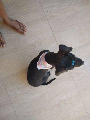 Doando essa cachorrinha - Foto 2