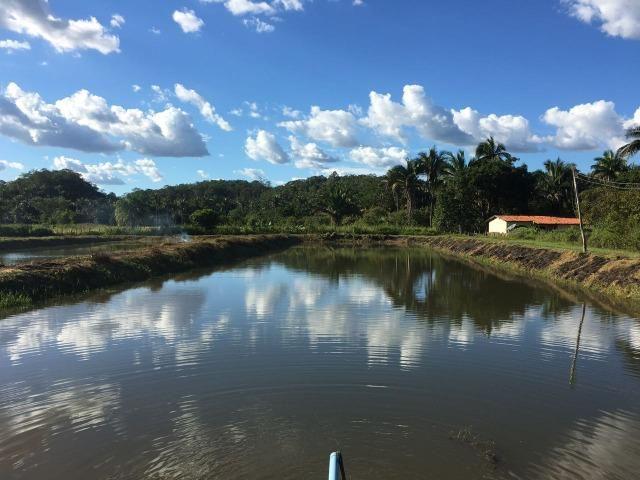 Fazenda com 980 hectares no município de Palmeirais-PI, 95 km de Teresina - Foto 8