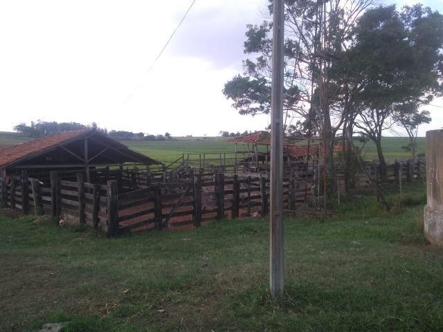 Vendo fazenda 250 alqueires próxima a presidente prudente - Foto 8