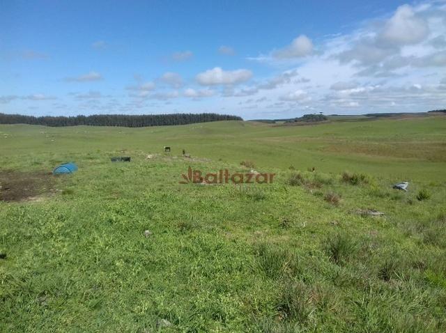 Vendo este excelente e magnífico campo, um verdadeiro paraíso, com a área de 150 hectares - Foto 7