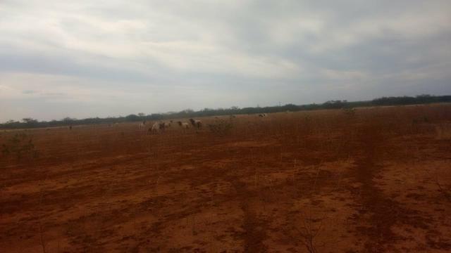 Vendo terreno em Recife de Jussara- Bahia. Contato 11- * - Foto 8