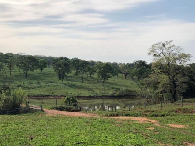 625 Alq. na Cultura | Ipameri-Goiás. Abaixo do Preço! - Foto 5