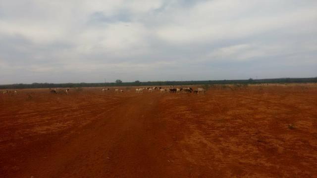 Vendo terreno em Recife de Jussara- Bahia. Contato 11- * - Foto 9