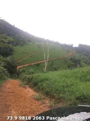 Fazenda a venda Bahia 30 hectares - Foto 3