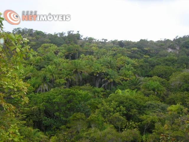 Fazenda com 52,5 Hectares com Fábrica de Azeite de Dendê à Venda na Ilha de Boipeba 402074 - Foto 3