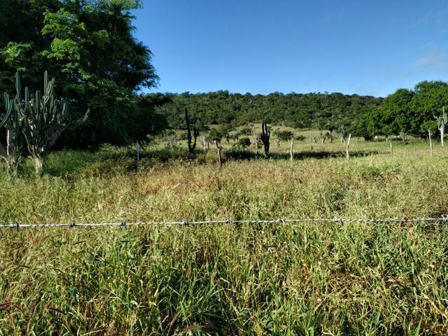 Fazenda com 126 Tarfeas há 70 km de Feira de Santana