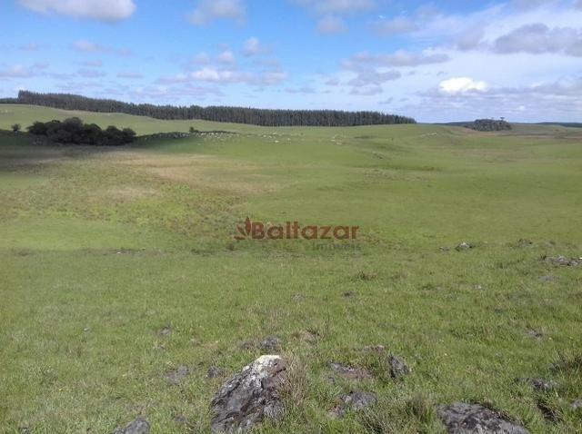 Vendo este excelente e magnífico campo, um verdadeiro paraíso, com a área de 150 hectares - Foto 2