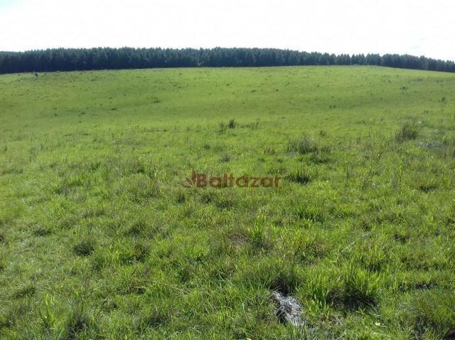 Vendo este excelente e magnífico campo, um verdadeiro paraíso, com a área de 150 hectares - Foto 6