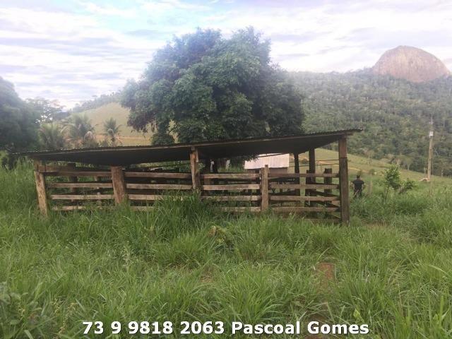 Fazenda a venda Bahia 30 hectares - Foto 8