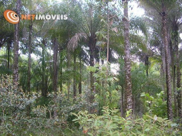 Fazenda com 52,5 Hectares com Fábrica de Azeite de Dendê à Venda na Ilha de Boipeba 402074 - Foto 12