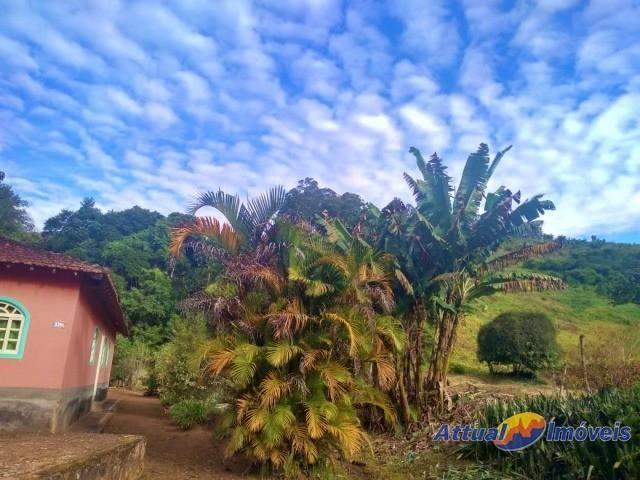 Sítio com excelente área, 3 nascentes, muita água! Próximo ao centro à venda em São José d - Foto 5