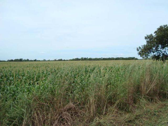 Fazenda 1500 hectares para Pecuária ou plantio de Soja no Tocantins