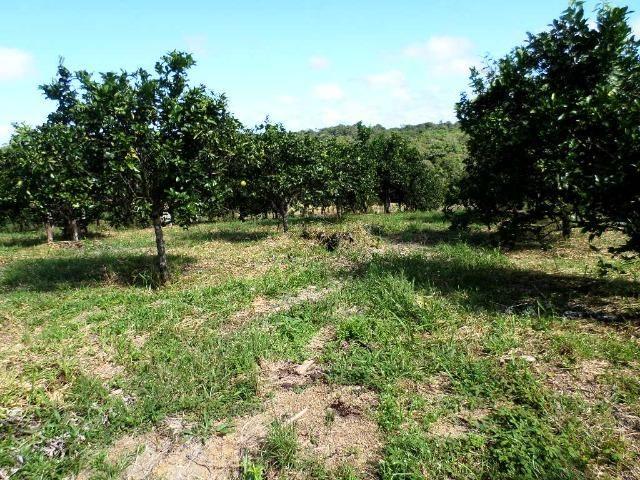 Fazenda na AM 010 km 110 2.100.000 - Foto 6