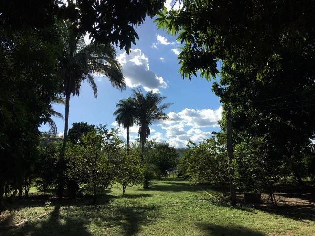 Fazenda com 980 hectares no município de Palmeirais-PI, 95 km de Teresina - Foto 4