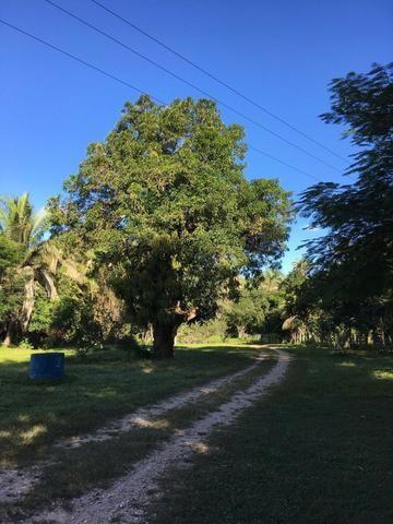 Fazenda com 980 hectares no município de Palmeirais-PI, 95 km de Teresina - Foto 10