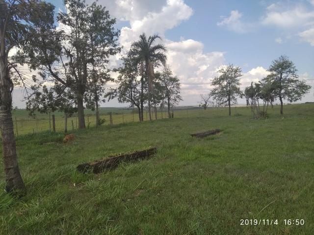 Vendo fazenda 250 alqueires próxima a presidente prudente - Foto 13