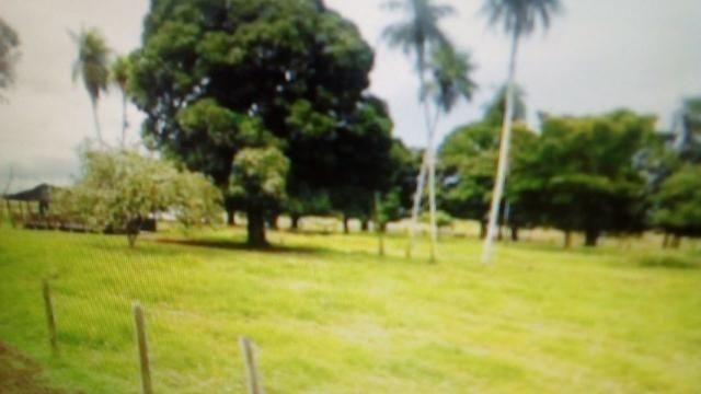 Fazenda 87945 hectares no pantanal Mato-Grossense. - Foto 6