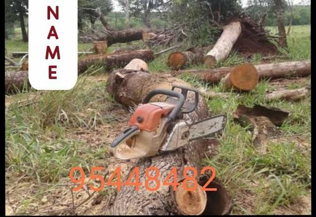 Corte de árvores *