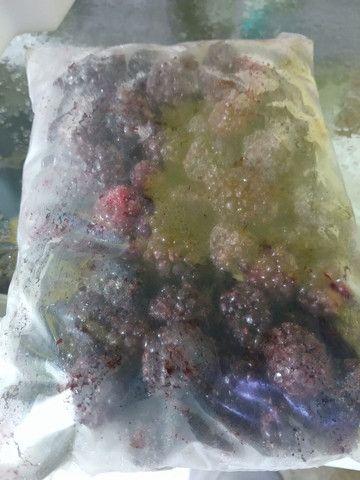 Amora Graúda Congelada pacote 1 kg - Foto 6